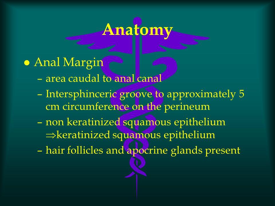 Anorectal Spaces l ischiorectal l perianal l intersphincteric l Postanal l supralevator l retrorectal