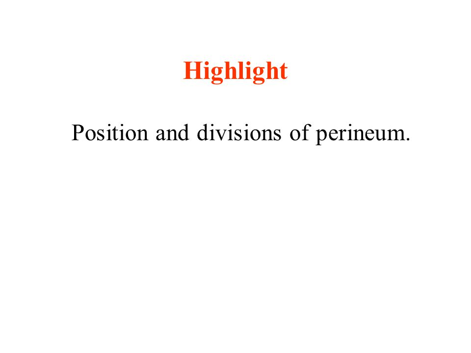 Highlight Position and divisions of perineum.