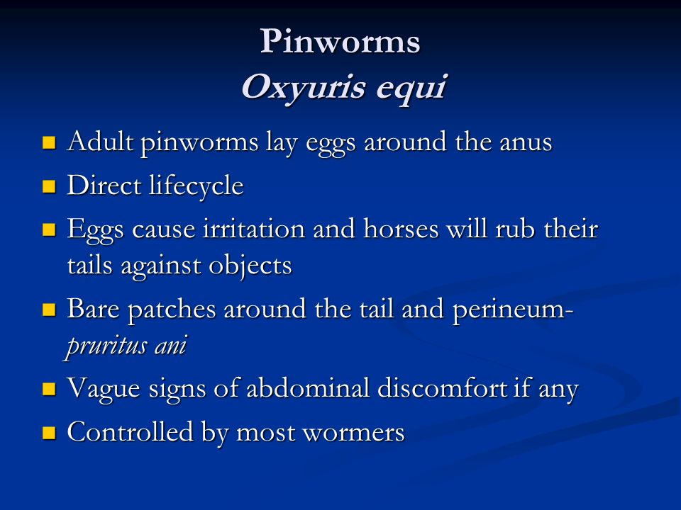 Pinworms Oxyuris equi Adult pinworms lay eggs around the anus Adult pinworms lay eggs around the anus Direct lifecycle Direct lifecycle Eggs cause irritation and horses will rub their tails against objects Eggs cause irritation and horses will rub their tails against objects Bare patches around the tail and perineum- pruritus ani Bare patches around the tail and perineum- pruritus ani Vague signs of abdominal discomfort if any Vague signs of abdominal discomfort if any Controlled by most wormers Controlled by most wormers