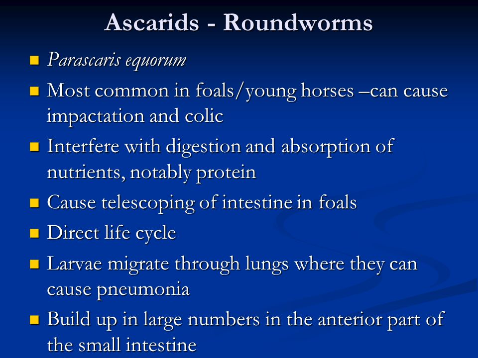 Ascarids - Roundworms Parascaris equorum Parascaris equorum Most common in foals/young horses –can cause impactation and colic Most common in foals/young horses –can cause impactation and colic Interfere with digestion and absorption of nutrients, notably protein Interfere with digestion and absorption of nutrients, notably protein Cause telescoping of intestine in foals Cause telescoping of intestine in foals Direct life cycle Direct life cycle Larvae migrate through lungs where they can cause pneumonia Larvae migrate through lungs where they can cause pneumonia Build up in large numbers in the anterior part of the small intestine Build up in large numbers in the anterior part of the small intestine
