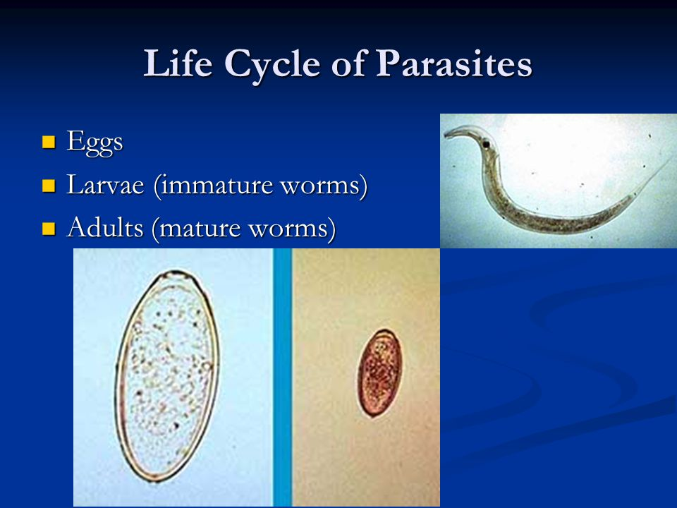 Life Cycle of Parasites Eggs Eggs Larvae (immature worms) Larvae (immature worms) Adults (mature worms) Adults (mature worms)