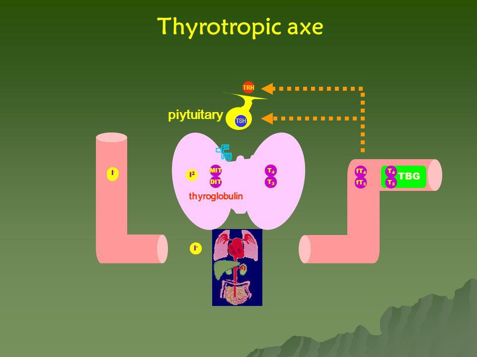 fT 4 fT 3 T4T4 T3T3 TRH T4T4 T3T3 TBG Thyrotropic axe I-I- MIT DIT I2I2 thyroglobulin fT 4 fT 3 T4T4 T3T3 I - piytuitary I-I- T4T4 T3T3 I-I- TSH fT 4 fT 3 TRH