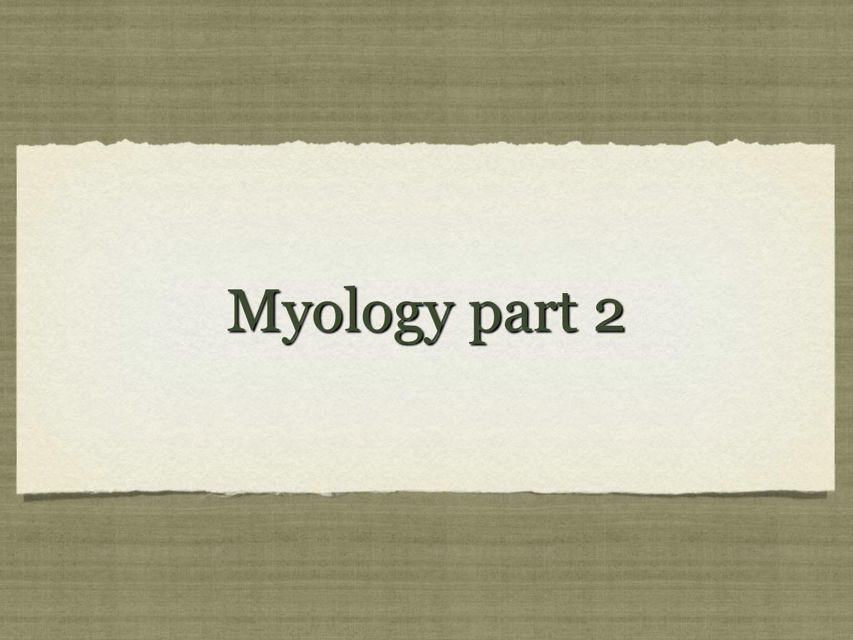 Myology part 2
