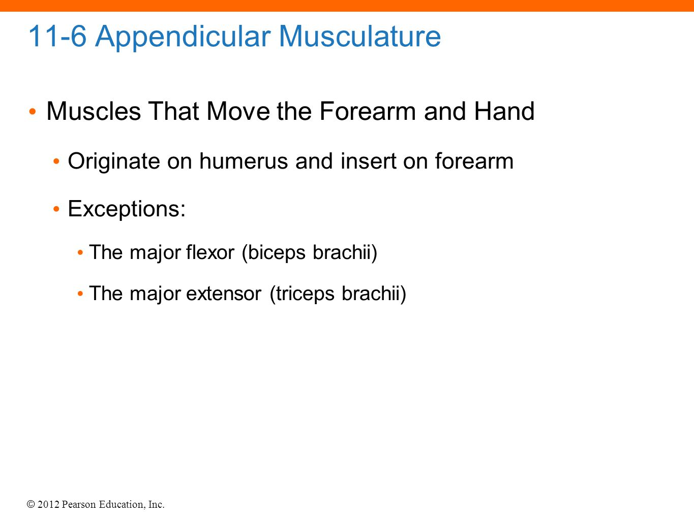 © 2012 Pearson Education, Inc. 11-6 Appendicular Musculature Muscles That Move the Forearm and Hand Originate on humerus and insert on forearm Excepti