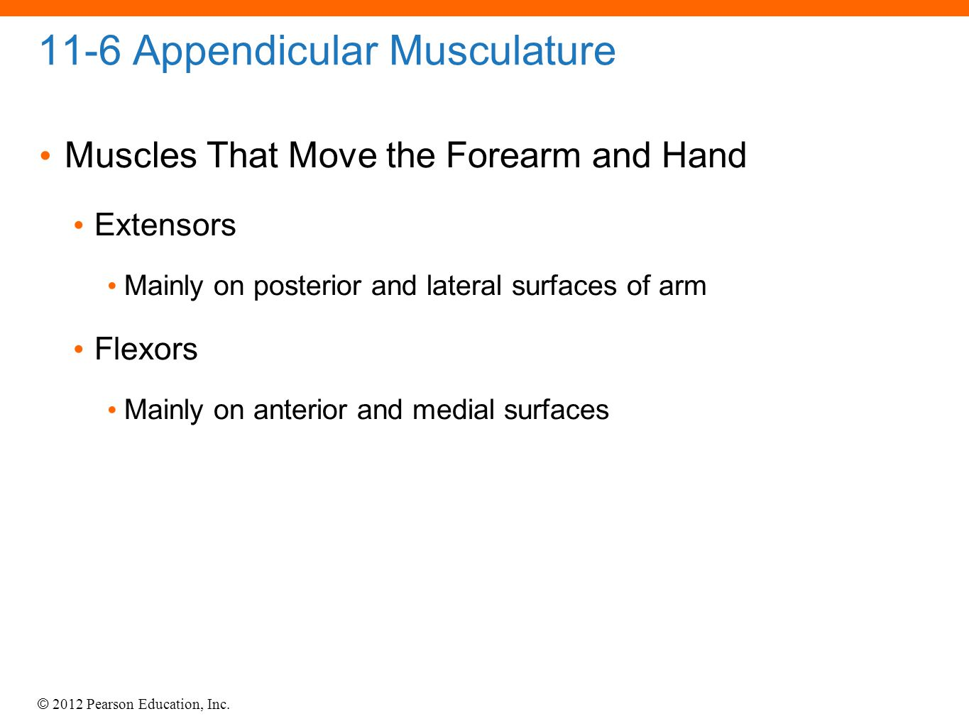 © 2012 Pearson Education, Inc. 11-6 Appendicular Musculature Muscles That Move the Forearm and Hand Extensors Mainly on posterior and lateral surfaces