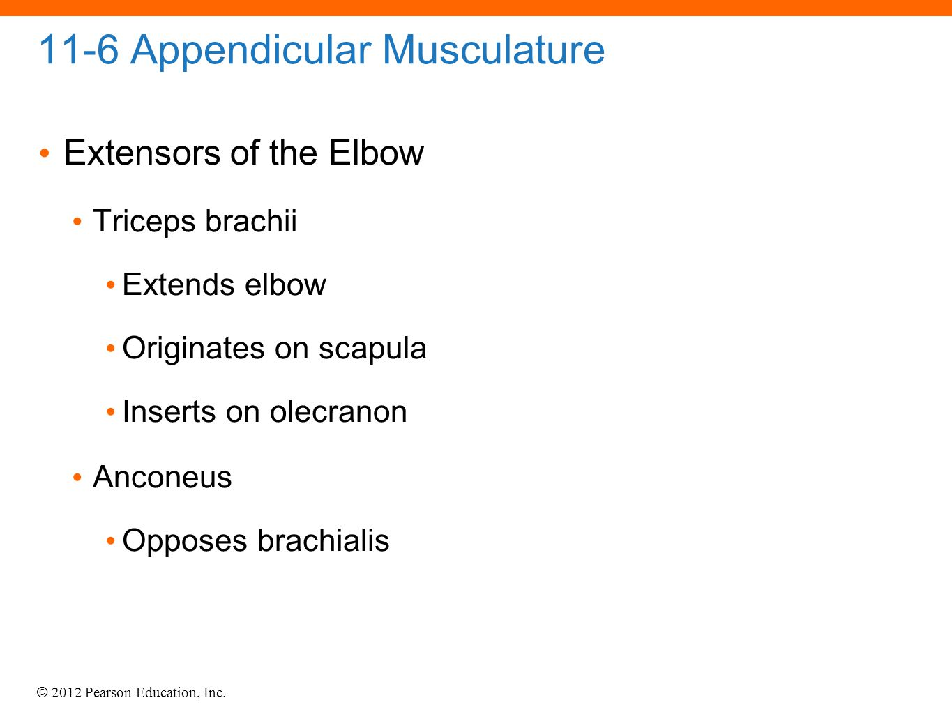 © 2012 Pearson Education, Inc. 11-6 Appendicular Musculature Extensors of the Elbow Triceps brachii Extends elbow Originates on scapula Inserts on ole