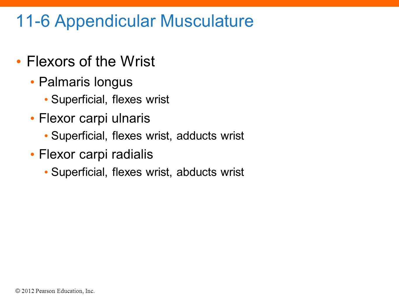 © 2012 Pearson Education, Inc. 11-6 Appendicular Musculature Flexors of the Wrist Palmaris longus Superficial, flexes wrist Flexor carpi ulnaris Super