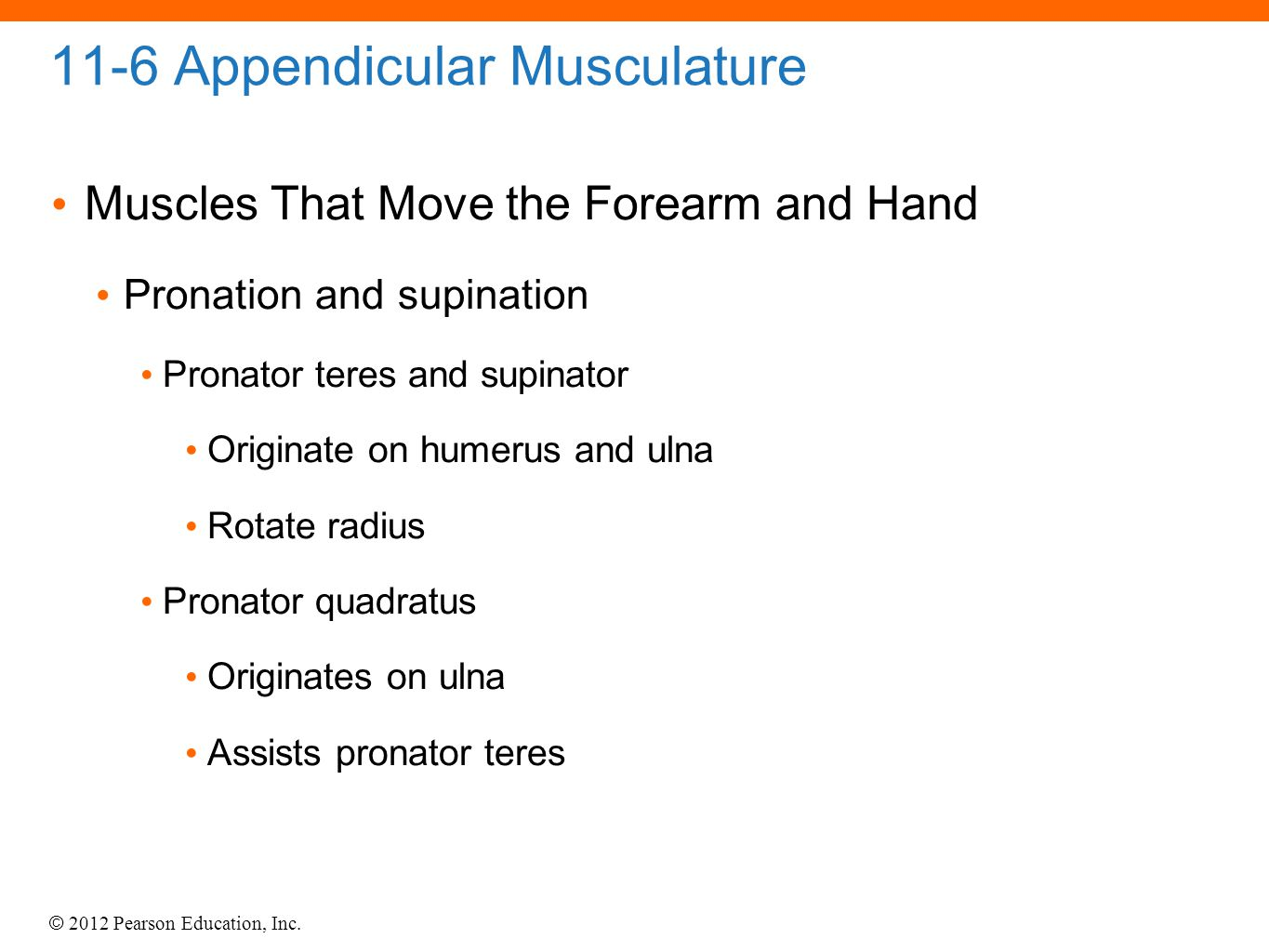 © 2012 Pearson Education, Inc. 11-6 Appendicular Musculature Muscles That Move the Forearm and Hand Pronation and supination Pronator teres and supina