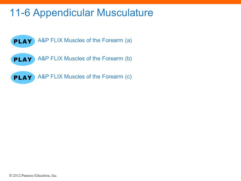 © 2012 Pearson Education, Inc. 11-6 Appendicular Musculature A&P FLIX Muscles of the Forearm (a) A&P FLIX Muscles of the Forearm (b) A&P FLIX Muscles