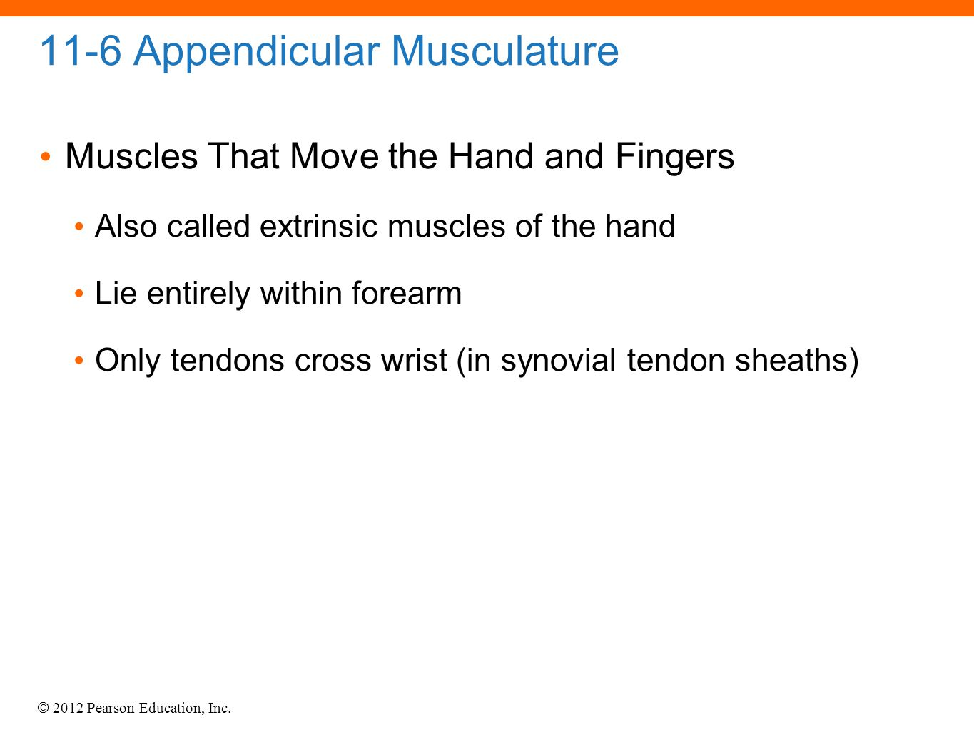 © 2012 Pearson Education, Inc. 11-6 Appendicular Musculature Muscles That Move the Hand and Fingers Also called extrinsic muscles of the hand Lie enti