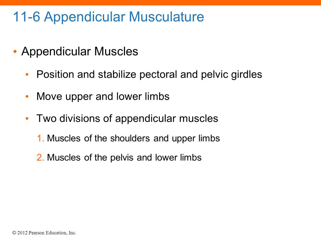 © 2012 Pearson Education, Inc. 11-6 Appendicular Musculature Appendicular Muscles Position and stabilize pectoral and pelvic girdles Move upper and lo