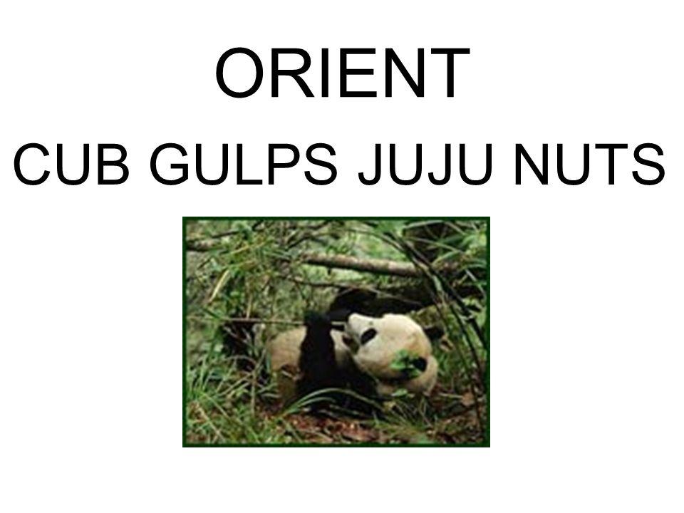 ORIENT CUB GULPS JUJU NUTS