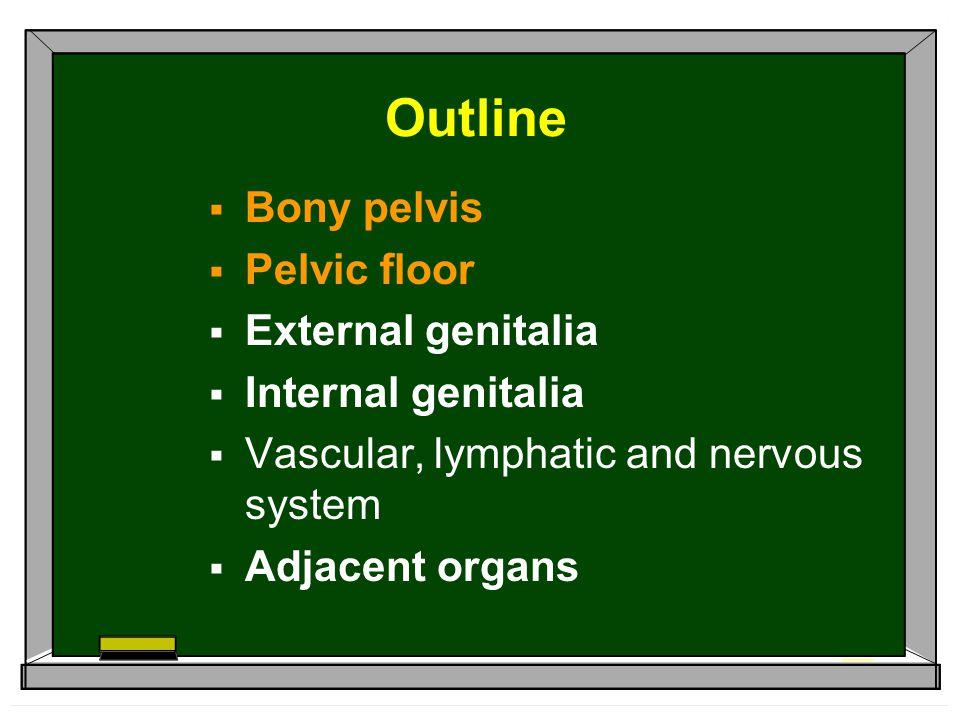 Outline  Bony pelvis  Pelvic floor  External genitalia  Internal genitalia  Vascular, lymphatic and nervous system  Adjacent organs