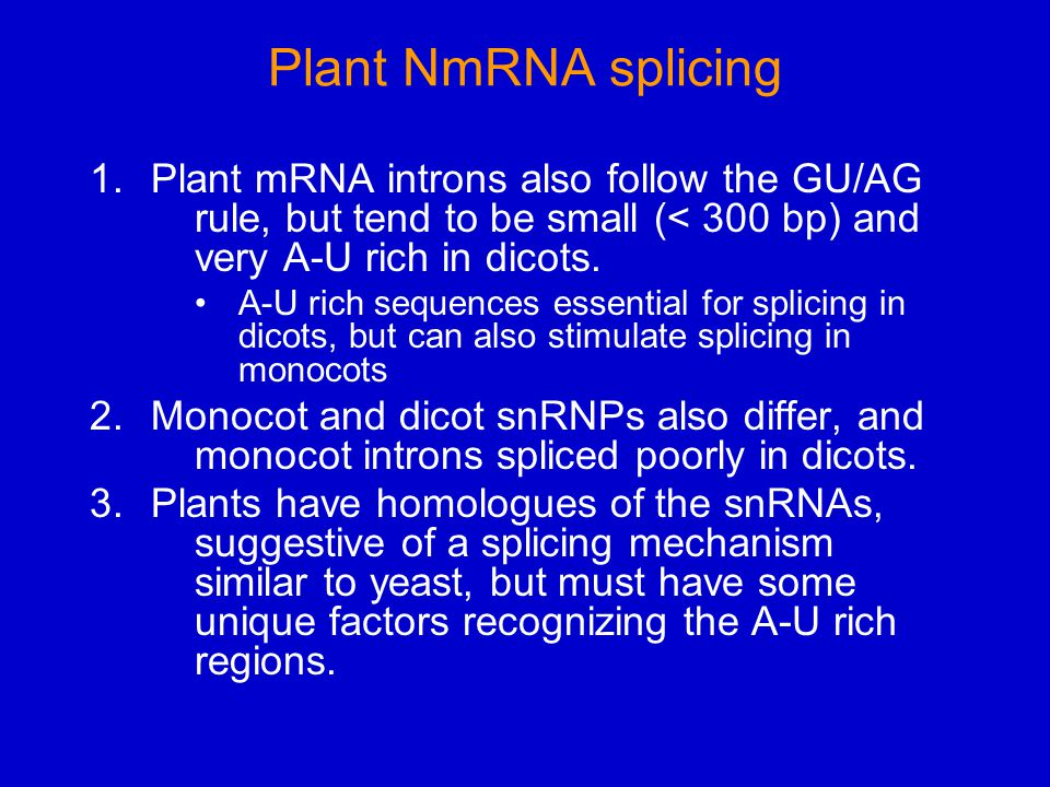 Plant NmRNA splicing 1.Plant mRNA introns also follow the GU/AG rule, but tend to be small (< 300 bp) and very A-U rich in dicots.