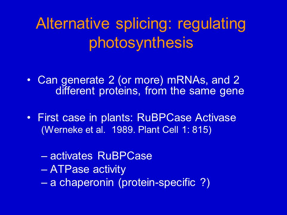Alternative splicing: regulating photosynthesis Can generate 2 (or more) mRNAs, and 2 different proteins, from the same gene First case in plants: RuB