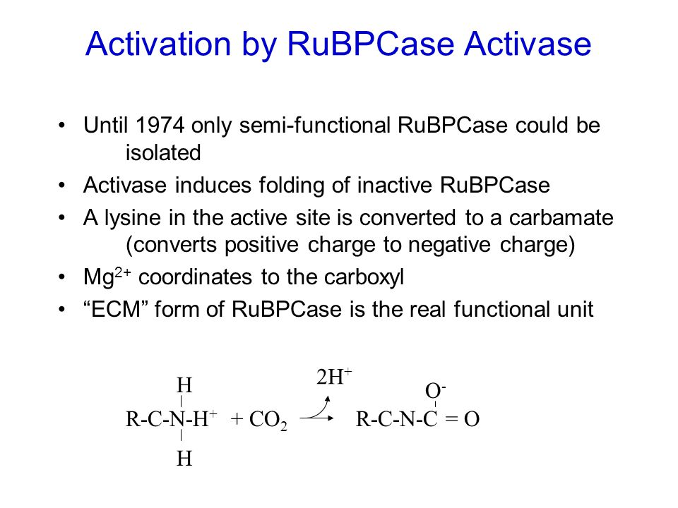 Activation by RuBPCase Activase Until 1974 only semi-functional RuBPCase could be isolated Activase induces folding of inactive RuBPCase A lysine in t