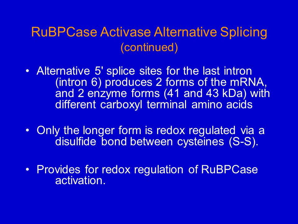 RuBPCase Activase Alternative Splicing (continued) Alternative 5 splice sites for the last intron (intron 6) produces 2 forms of the mRNA, and 2 enzyme forms (41 and 43 kDa) with different carboxyl terminal amino acids Only the longer form is redox regulated via a disulfide bond between cysteines (S-S).