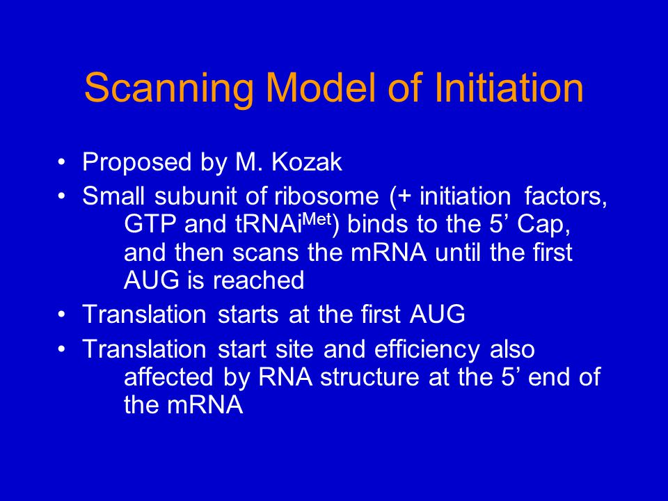 Scanning Model of Initiation Proposed by M. Kozak Small subunit of ribosome (+ initiation factors, GTP and tRNAi Met ) binds to the 5' Cap, and then s