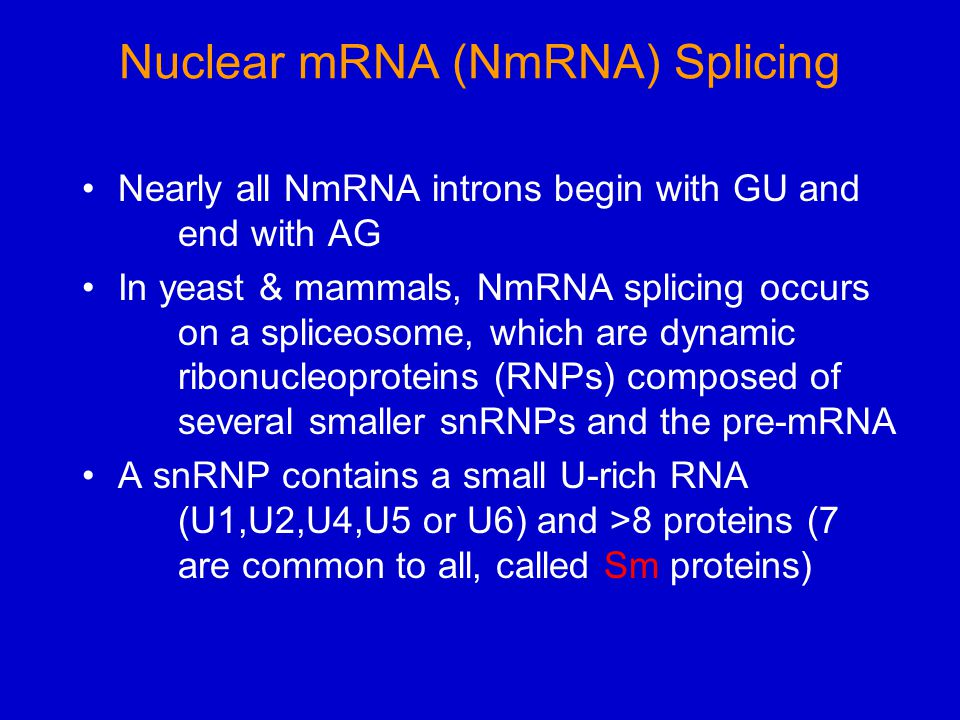 Nuclear mRNA (NmRNA) Splicing Nearly all NmRNA introns begin with GU and end with AG In yeast & mammals, NmRNA splicing occurs on a spliceosome, which are dynamic ribonucleoproteins (RNPs) composed of several smaller snRNPs and the pre-mRNA A snRNP contains a small U-rich RNA (U1,U2,U4,U5 or U6) and >8 proteins (7 are common to all, called Sm proteins)