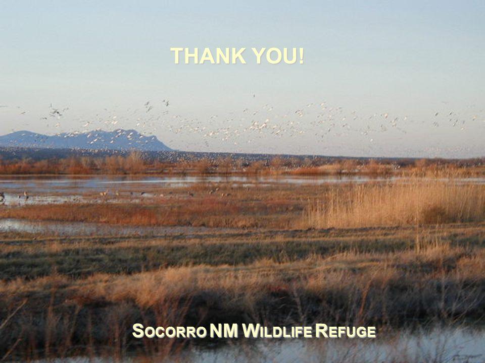THANK YOU! S OCORRO NM W ILDLIFE R EFUGE