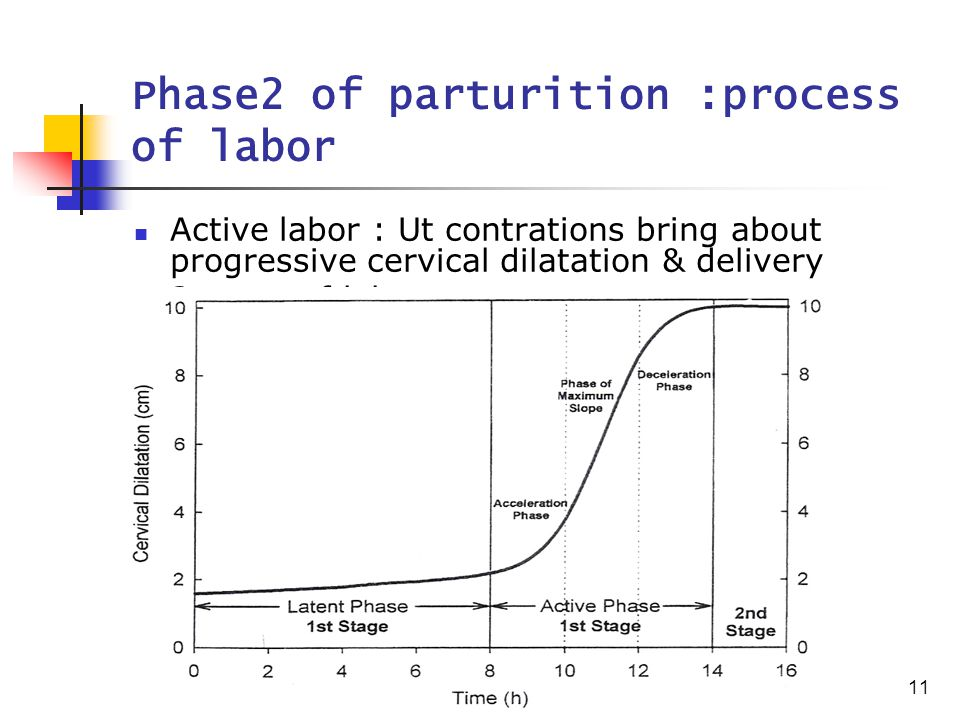 11 Phase2 of parturition :process of labor Active labor : Ut contrations bring about progressive cervical dilatation & delivery 3 stage of labor
