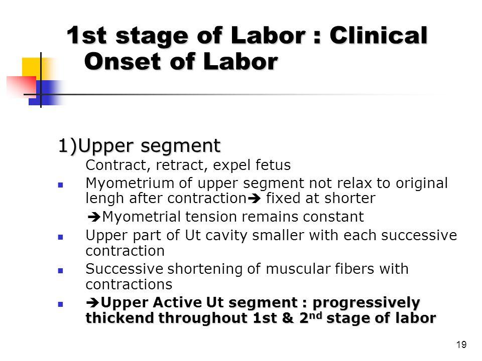 19 1)Upper segment Contract, retract, expel fetus Myometrium of upper segment not relax to original lengh after contraction  fixed at shorter  Myome
