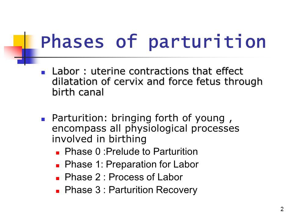 2 Phases of parturition Labor : uterine contractions that effect dilatation of cervix and force fetus through birth canal Labor : uterine contractions