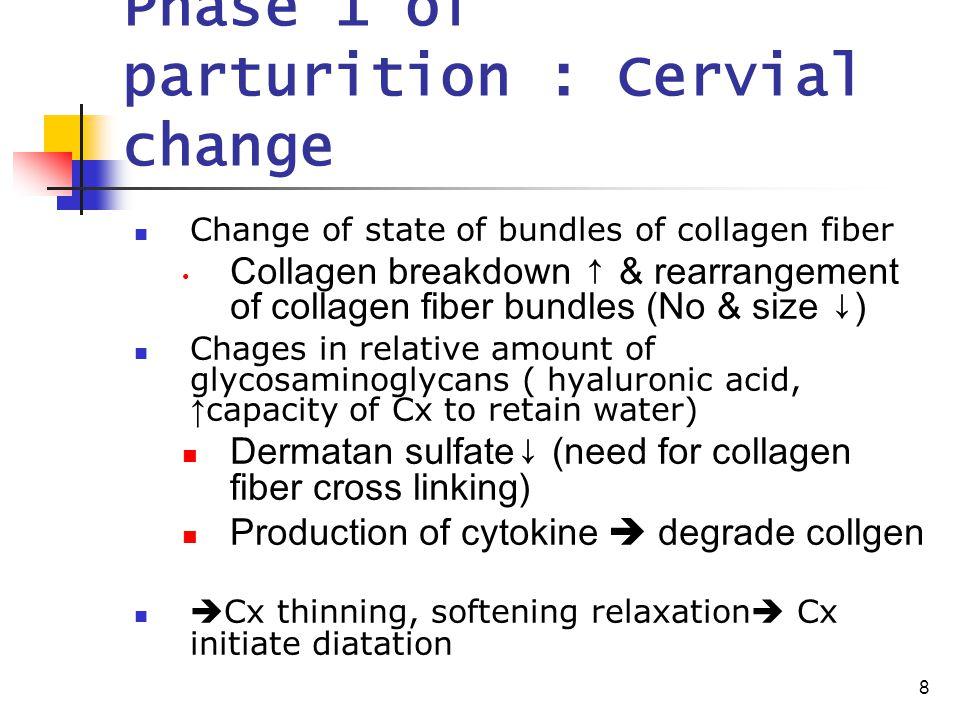8 Phase 1 of parturition : Cervial change Change of state of bundles of collagen fiber Collagen breakdown ↑ & rearrangement of collagen fiber bundles