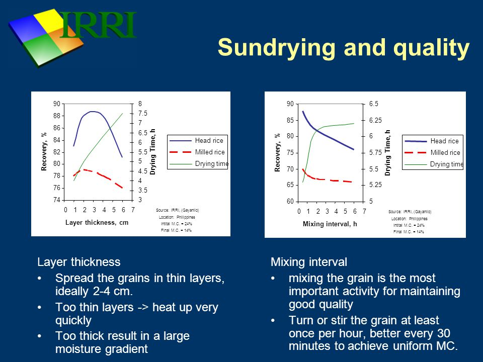 Sundrying and quality Layer thickness Spread the grains in thin layers, ideally 2-4 cm.