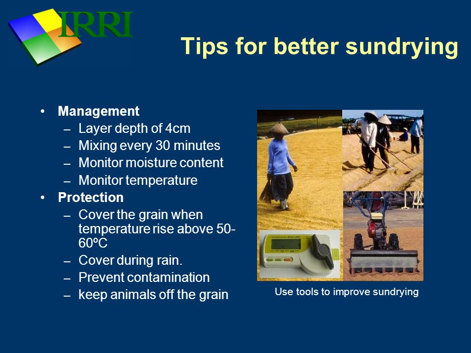 Tips for better sundrying Management – Layer depth of 4cm – Mixing every 30 minutes – Monitor moisture content – Monitor temperature Protection – Cover the grain when temperature rise above 50- 60ºC – Cover during rain.