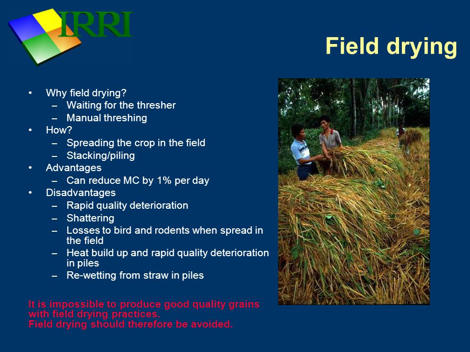 Field drying Why field drying. – Waiting for the thresher – Manual threshing How.