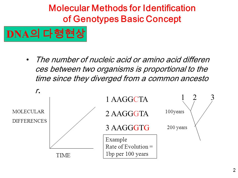 2 Molecular Methods for Identification of Genotypes Basic Concept The number of nucleic acid or amino acid differen ces between two organisms is propo