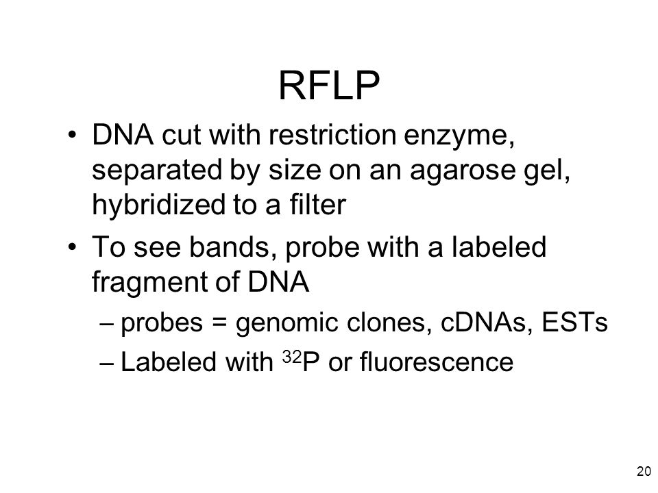 20 RFLP DNA cut with restriction enzyme, separated by size on an agarose gel, hybridized to a filter To see bands, probe with a labeled fragment of DN