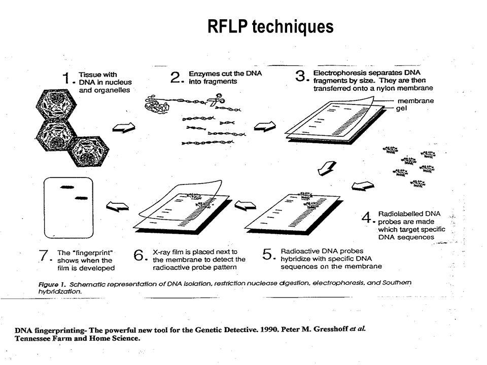 21 RFLP techniques