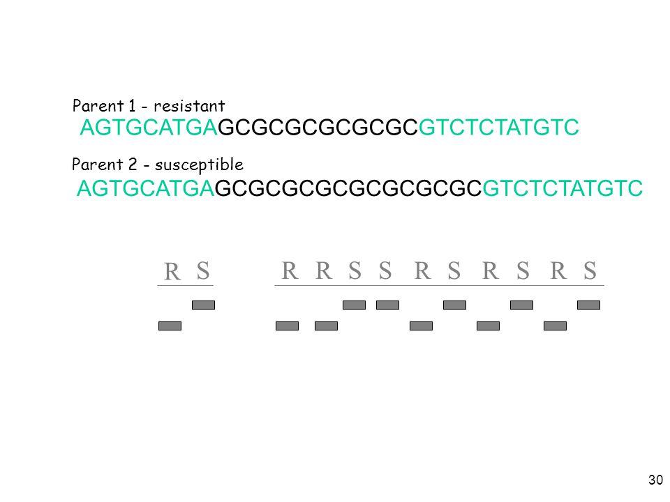 30 AGTGCATGAGCGCGCGCGCGCGCGCGTCTCTATGTC AGTGCATGAGCGCGCGCGCGCGTCTCTATGTC S R SRR SRSRS R S Parent 1 - resistant Parent 2 - susceptible