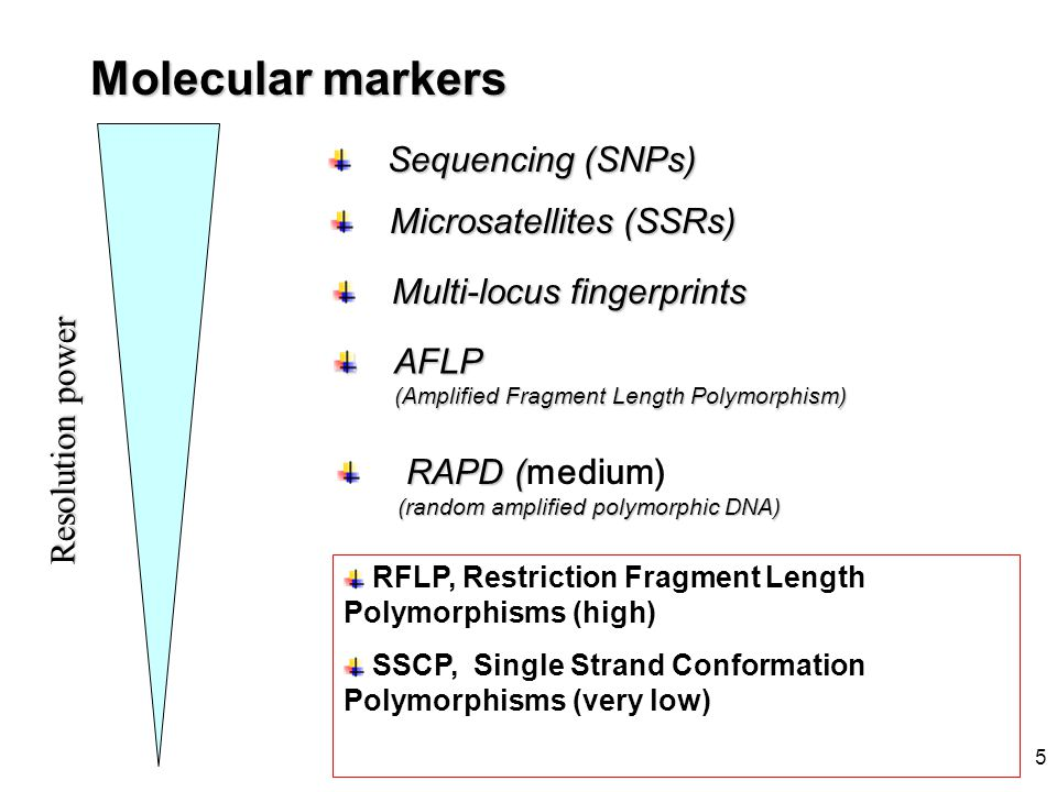 5 Molecular markers Resolutionpower Resolution power RFLP, Restriction Fragment Length Polymorphisms (high) SSCP, Single Strand Conformation Polymorph