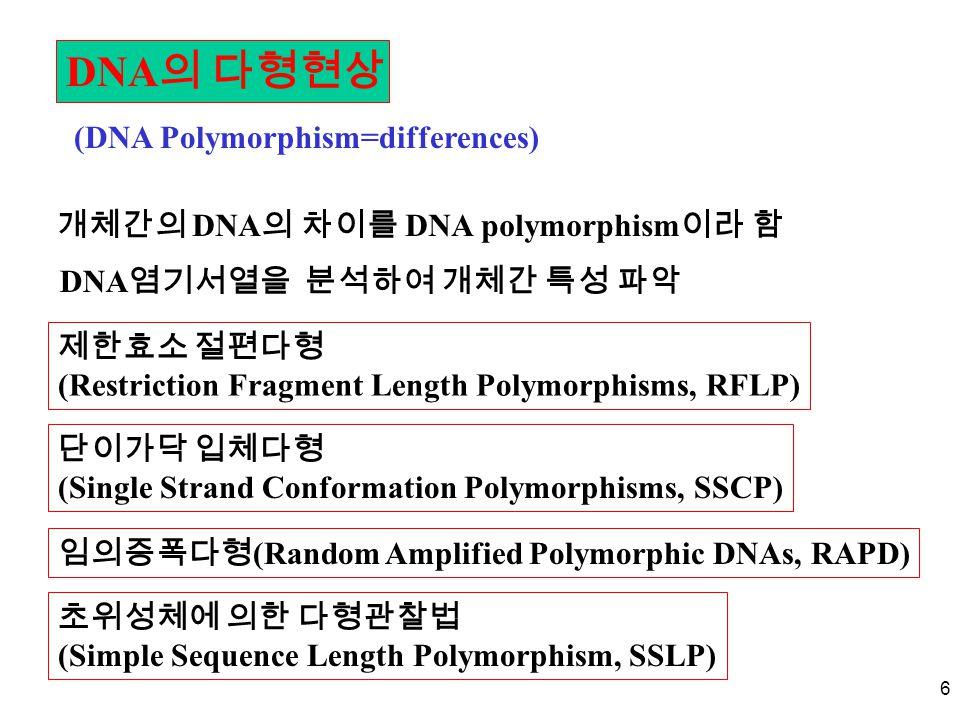6 DNA 의 다형현상 (DNA Polymorphism=differences) 개체간의 DNA 의 차이를 DNA polymorphism 이라 함 DNA 염기서열을 분석하여 개체간 특성 파악 제한효소 절편다형 (Restriction Fragment Length Polymorphisms, RFLP) 단이가닥 입체다형 (Single Strand Conformation Polymorphisms, SSCP) 임의증폭다형 (Random Amplified Polymorphic DNAs, RAPD) 초위성체에 의한 다형관찰법 (Simple Sequence Length Polymorphism, SSLP)