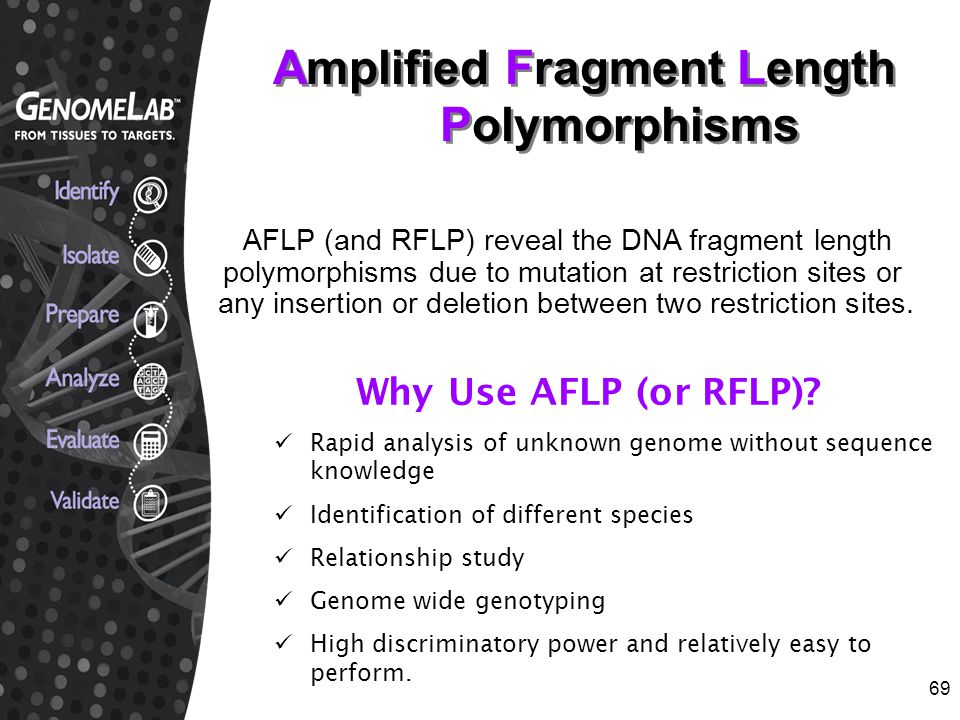 69 AFLP (and RFLP) reveal the DNA fragment length polymorphisms due to mutation at restriction sites or any insertion or deletion between two restrict