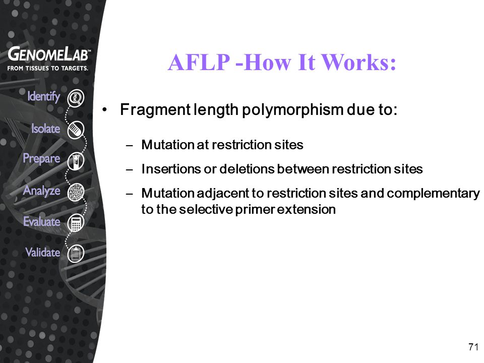 71 AFLP -How It Works: Fragment length polymorphism due to: –Mutation at restriction sites –Insertions or deletions between restriction sites –Mutatio