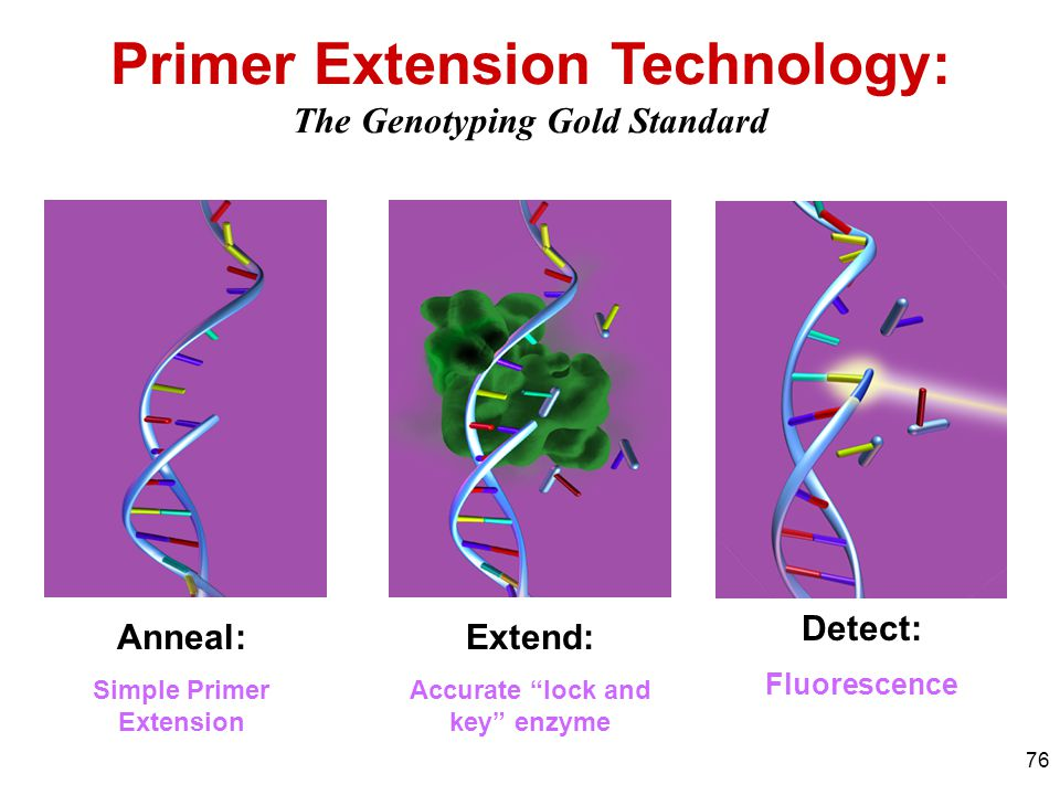 "76 Primer Extension Technology: The Genotyping Gold Standard Detect function Anneal: Simple Primer Extension Extend: Accurate ""lock and key"" enzyme De"