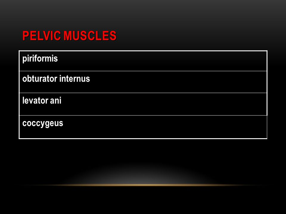 PELVIC MUSCLES piriformis obturator internus levator ani coccygeus