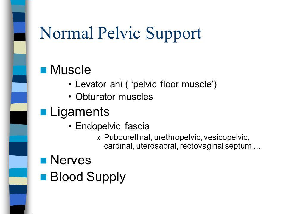 Normal Pelvic Support Muscle Levator ani ( 'pelvic floor muscle') Obturator muscles Ligaments Endopelvic fascia »Pubourethral, urethropelvic, vesicopelvic, cardinal, uterosacral, rectovaginal septum … Nerves Blood Supply