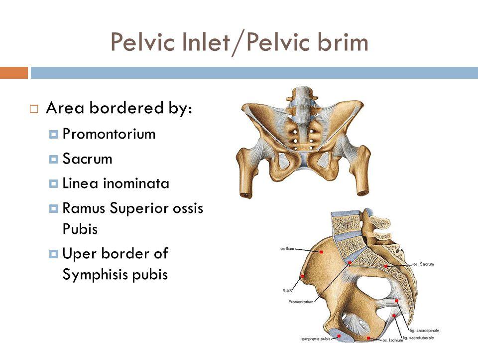 Pelvic Inlet/Pelvic brim  Area bordered by:  Promontorium  Sacrum  Linea inominata  Ramus Superior ossis Pubis  Uper border of Symphisis pubis