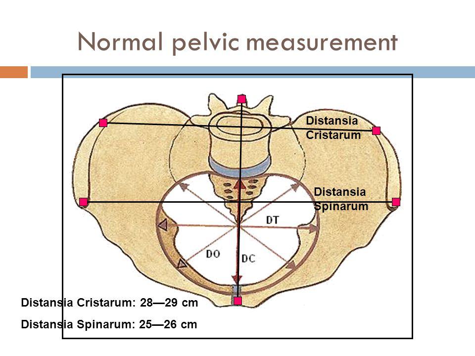 Normal pelvic measurement Distansia Spinarum Distansia Cristarum Distansia Cristarum: 28—29 cm Distansia Spinarum: 25—26 cm