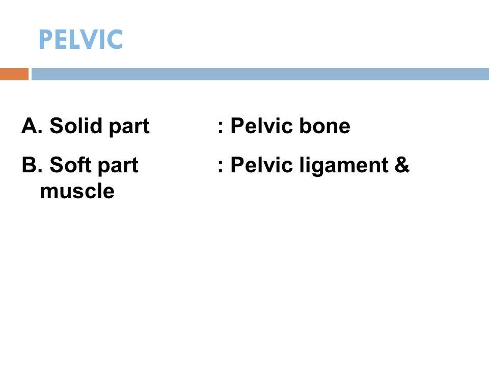 PELVIC A. Solid part: Pelvic bone B. Soft part: Pelvic ligament & muscle