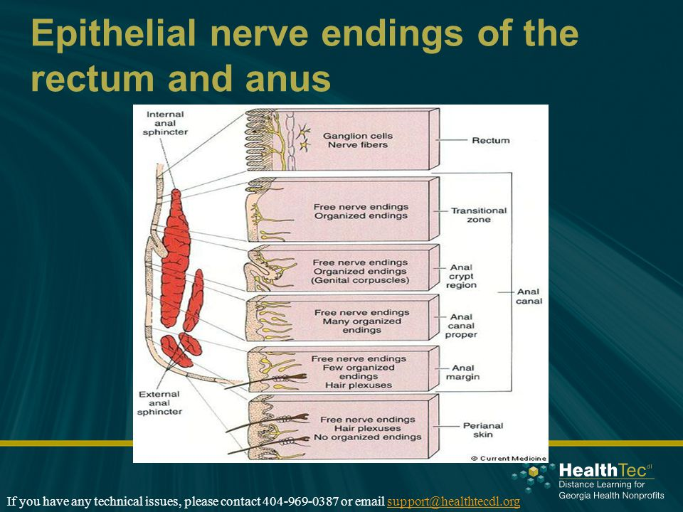 Epithelial nerve endings of the rectum and anus If you have any technical issues, please contact 404-969-0387 or email support@healthtecdl.orgsupport@