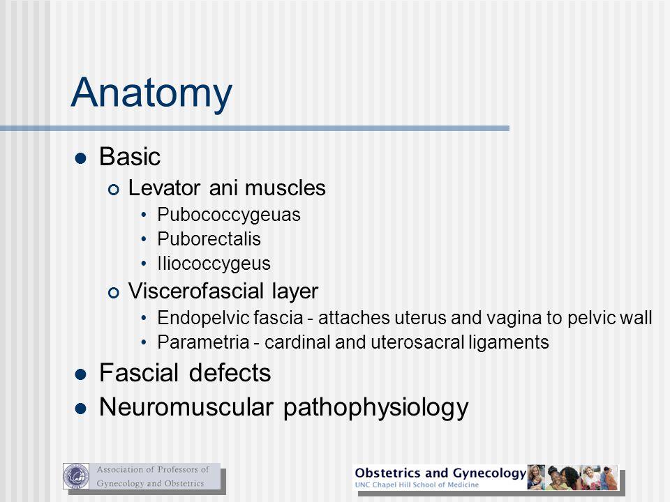 Anatomy Basic Levator ani muscles Pubococcygeuas Puborectalis Iliococcygeus Viscerofascial layer Endopelvic fascia - attaches uterus and vagina to pel