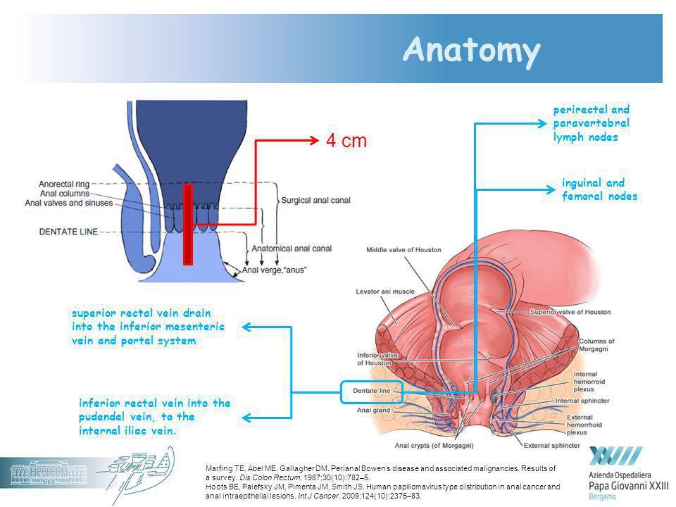 Anatomy 4 cm superior rectal vein drain into the inferior mesenteric vein and portal system inferior rectal vein into the pudendal vein, to the intern