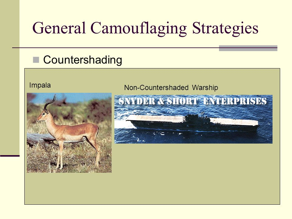 General Camouflaging Strategies Countershading Impala Non-Countershaded Warship