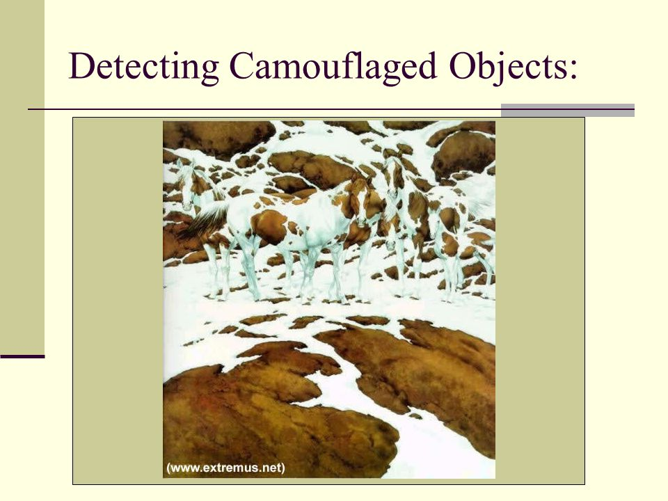 Detecting Camouflaged Objects: